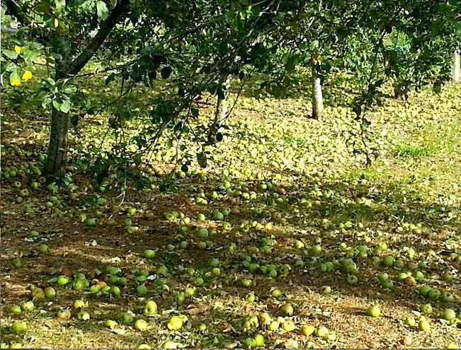 campos-manzanos