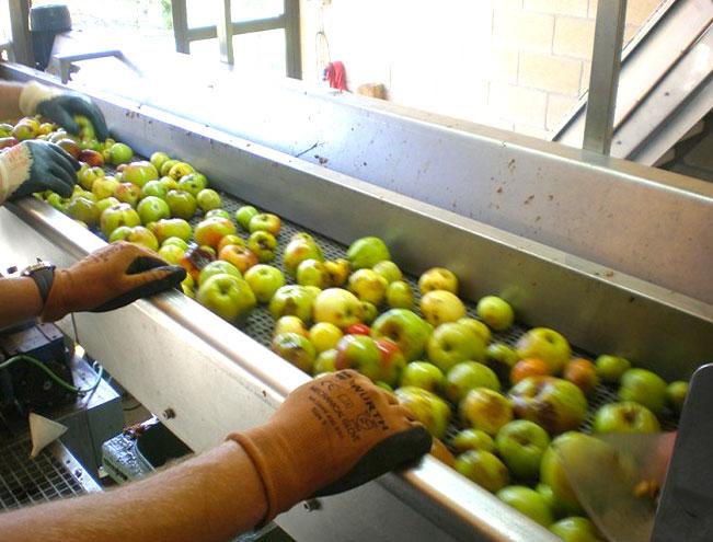 seleccion-limpieza-manzana